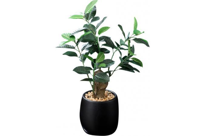 Vente plante tritoo maison et jardin - Plantes artificielles discount ...