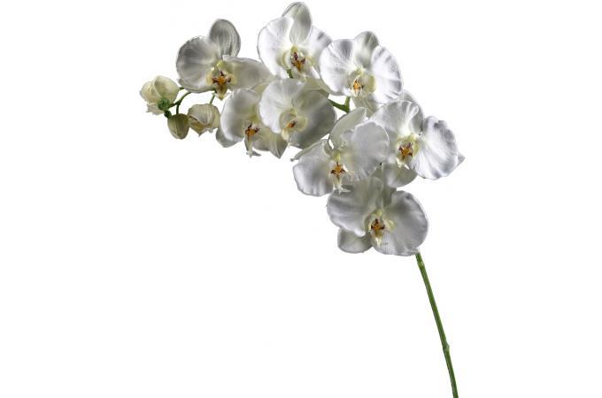 Plante artificielle phalaenopsis blanche h 101 cm plantes artificielles pas cher for Plante 90 cm